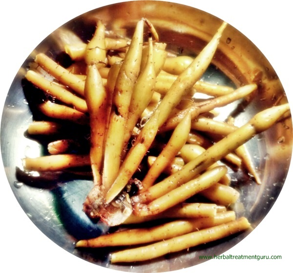 www.herbaltreatmentguru.com